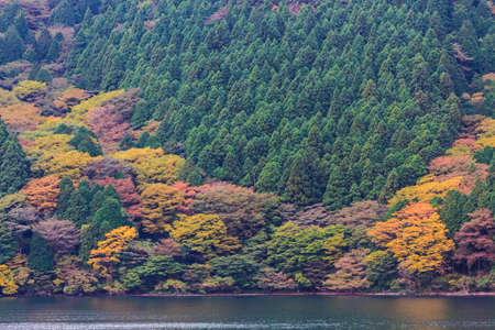 Beautiful landscape of autumn leaves colors in Hakone, Japan. photo