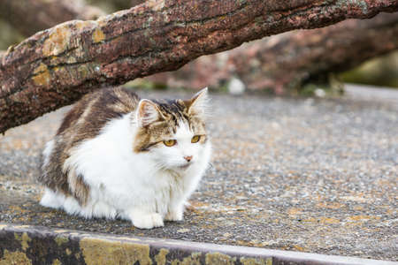 nice stay: Cat is resting under the tree on ground , cute funny cat. Stock Photo