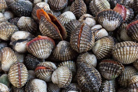 animal blood: Fresh Shellfish Blood Cockles market edible background.