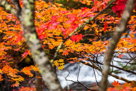 Colorful maple leaf in autumn landscape with bright colorful leaves. Reklamní fotografie