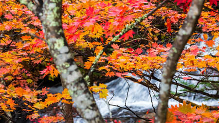 Colorful maple leaf in autumn landscape with bright colorful leaves. Archivio Fotografico