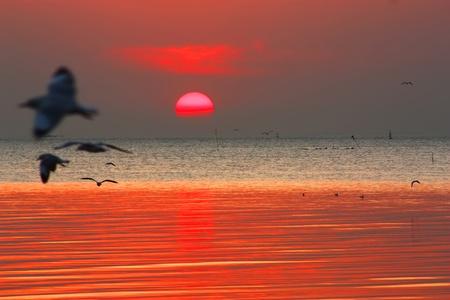seagulls in the sunrises