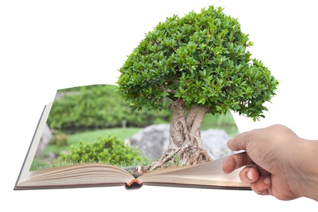 open book with grass and tree