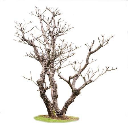toter baum: Einzelne alte und toter Baum