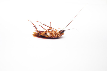 Dead cockroaches on isolated Stock Photo