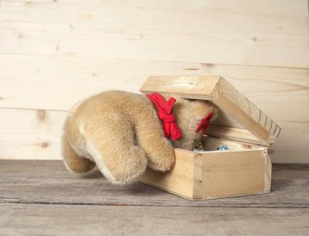 cute teddy bear in gift box