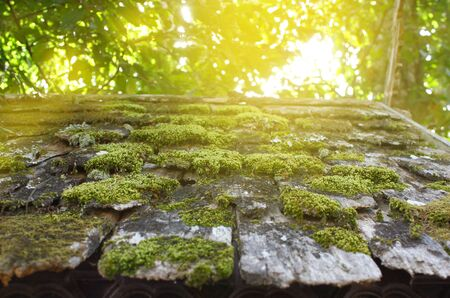 focus: Bright green of mossy wood roof in rural Japan