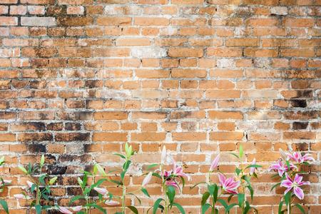 stargazer lily: Lilly flower on brick background