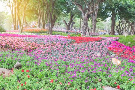 flor violeta: Flores de jard?n
