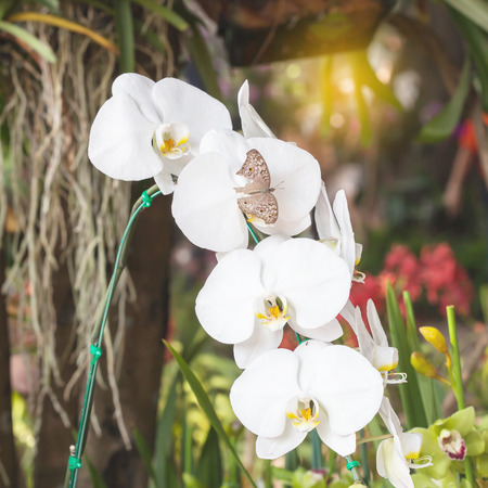 orchidea: White orchidea on  background Stock Photo