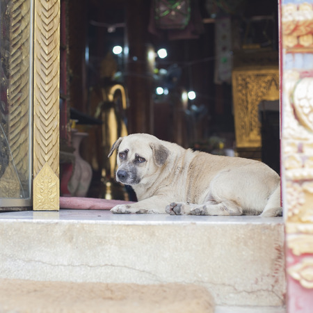 cur: Street Dog in Temple