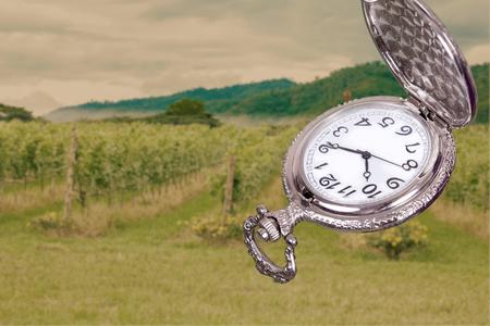 grape field: vintage pocket watch with grape field