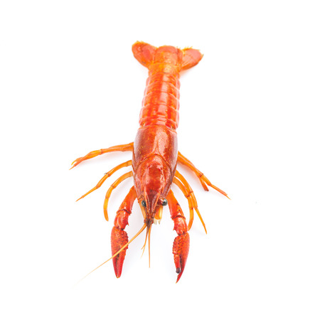 fresh crayfish on white background Stock Photo