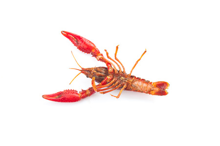fresh crayfish on white background Stock Photo