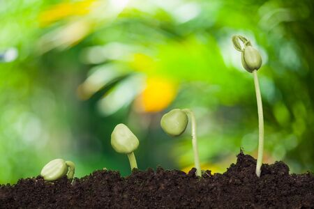 New Young plant growing in the creamy light and green nature bokeh background , business financial concept ,save Earth