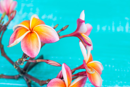 fragrant: Plumeria flower on wood