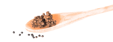 Zanthozylum limonella Alston herb test hot and spices on white background  版權商用圖片