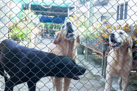 dogs in a dog shelter behind the fence. 写真素材