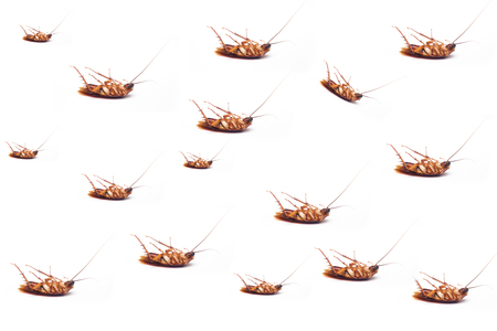 Dead cockroach on white background .