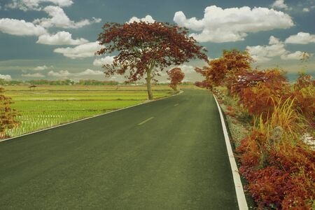 autumn colorful tree on the road to countryside .