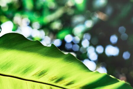 Green leaf on nature background.