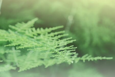 Close up and Soft focus of Green leaf background.