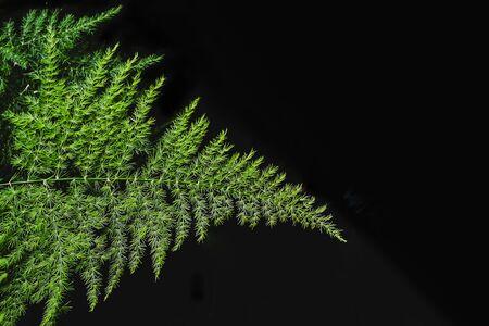Green leaf on black color background.