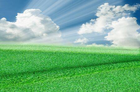 Green grass. natural background texture. fresh green grass. Фото со стока