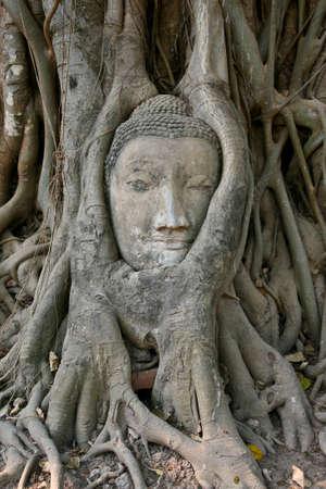 budha: budha head in tree