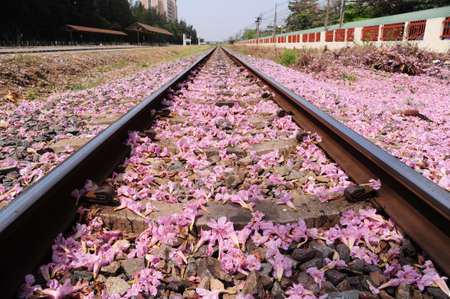 concep: Pink flower fall  near railway. Nature and industry concep
