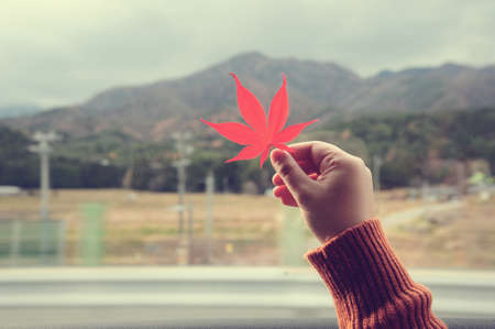 Hand holding a maple leaf in vintage style photo