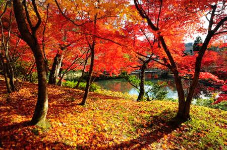 Japanese maple during autumn at Eikando Temple in Kyoto, Japan. Stock Photo - 25309487