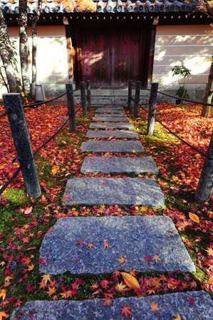 feuilles d'�rable sur ston pied au Temple Eikando � Kyoto, au Japon.
