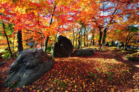 Japanese maple during autumn at Eikando Temple in Kyoto, Japan. Stock Photo - 25295462