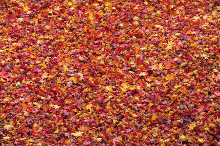Fallen leaves on the road  , Background Stock Photo - 25309516