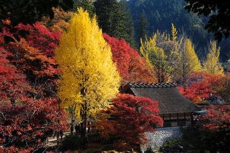 Belle Colorful Autumn Leaves  vert, jaune, orange, rouge