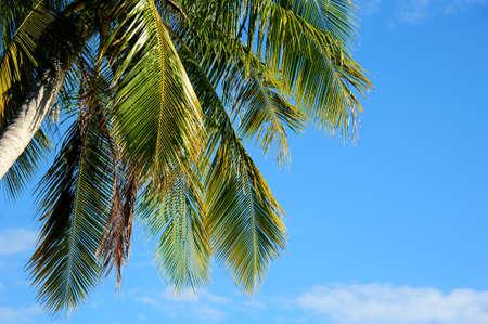 himmel hintergrund: Grüne Palme auf blauer Himmel Hintergrund Lizenzfreie Bilder