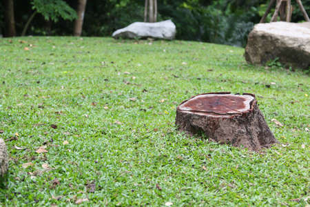 Stub of aged tree photo