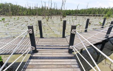 Wood bridge in Thailand mangrove national park image photo
