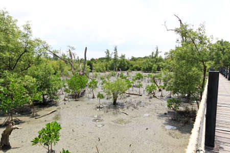 Thailand mangrove national park image photo