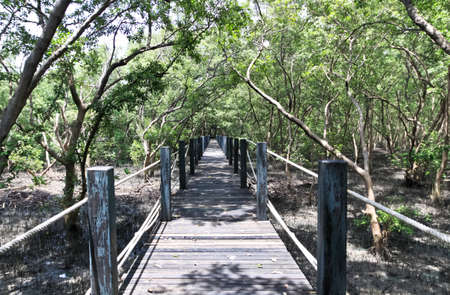 Wood bridge in Thailand mangrove national park image photo