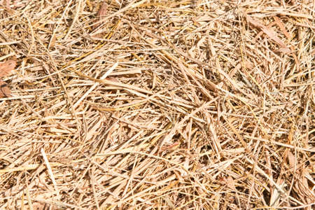 feedstock: Dry Straw Texture ,Dry straw texture background.