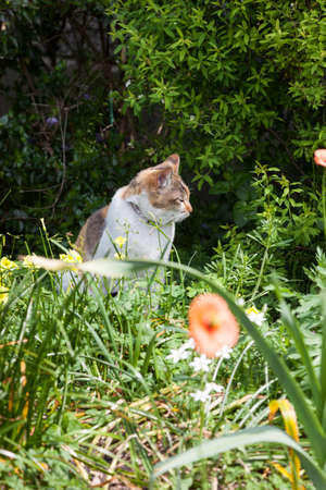catnap: Cat relaxing in the garden.