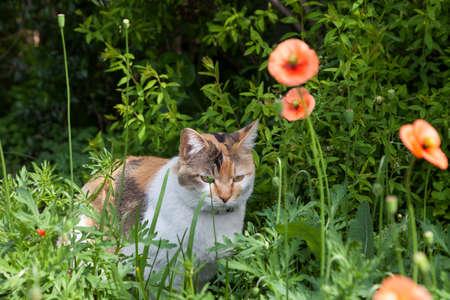 catnap: Cat relaxing in the garden.