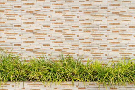 Brown stone wall ,The beautiful decorative plant on the modern wall Imagens