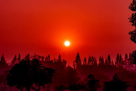 Red sky and white sun during morning sunrise in jungle, sun shining above black big trees and spires, landscape Imagens