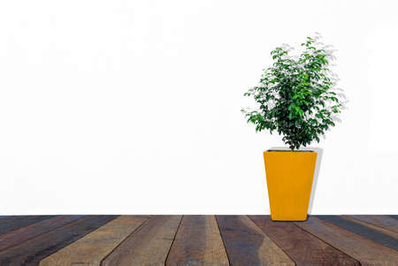 Yellow pots on wooden floors , White background Imagens