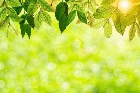 Fresh and green leaves green bokeh on nature abstract blur background green bokeh from tree.