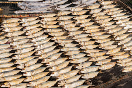 salted Mackerel, is fish cured with dry salt and thus preserved for later eating. Photographed at close range in the fish market. Imagens