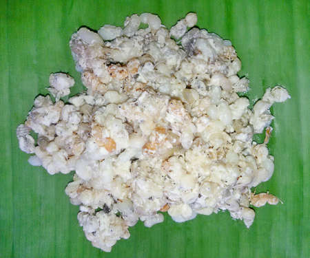 platanos fritos: Huevos de las hormigas en la hoja del plátano. Raro concepto de comida tradicional cocina local de Tailandia y Lao. (Comida local)
